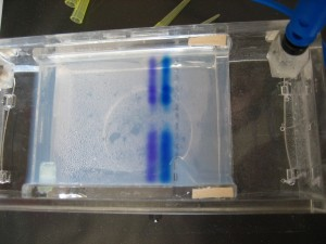 chemical, test, laboratory, electrophoresis