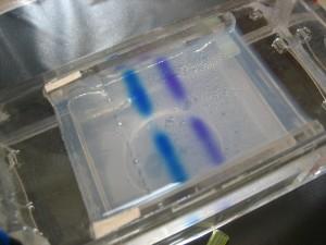geeliä, elektroforeesi, kemian-, testi, laboratorio