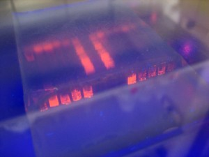gel, electrophoresis, light
