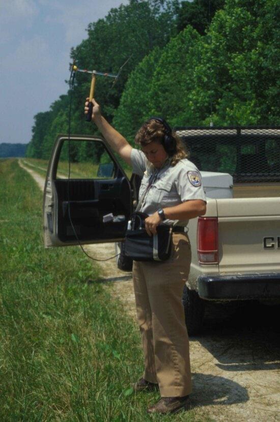 employee, holds, wildlife, radio, telemetry, tracking, device