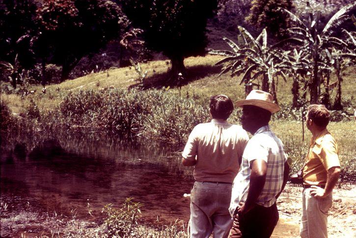 entomologic, felt, teknikere, undersøkt, tropical området, Haiti, anopheles, mygg