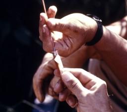 lääkäri, purkaminen, veri, kerätä, pieni, selkärankaisten, 1974, arbovirus, tutkimus