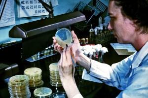laborantin, photographié, isolement, Salmonella, Shigella, coli
