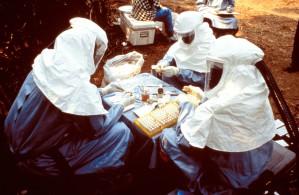 scientifiques, a pris, des échantillons, des animaux, recueillis, Kikwit, au Zaïre