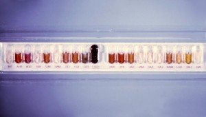 puits, inoculés, clostridium perfringens