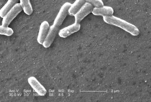 kombination, bogstaver, tal, navn, bakterie