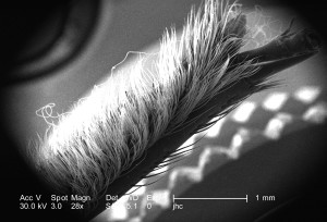exoesqueleto, características morfológicas, cabeza, región, no identificado, escarabajo