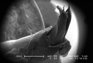 abdominal, region, small, hymenopteran, insect