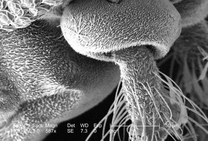 moderat, høy forstørrelse, 587 x, skanning, elektron mikroskop-bilde, morfologiske, funksjoner