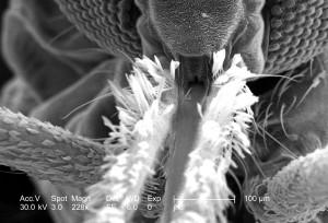 hodet, insekt, mikroskop, sensor, fôring