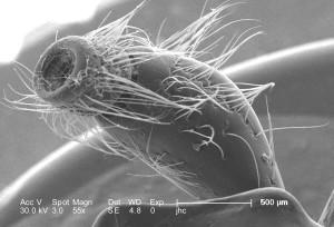 bilatéralement, situés, des antennes, des structures, des insectes, répertoire, sensorielles, appareils