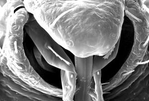 近位、解剖学的、関係、昆虫、ピアス、口器、皮膚、血、食事を取得