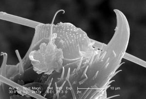 de près, un, deux, insectes, crochets