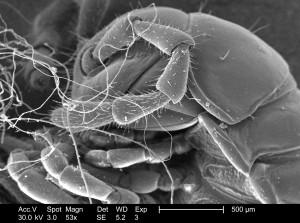 detalles, insectos, microscopio