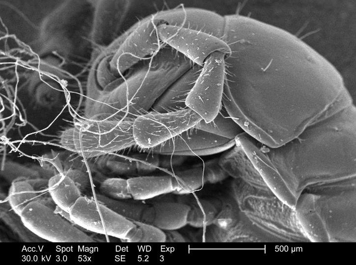 détails, insecte, microscope