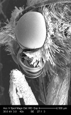 Podrobnosti, hlava, noha, kĺb, neznámi, hmyz