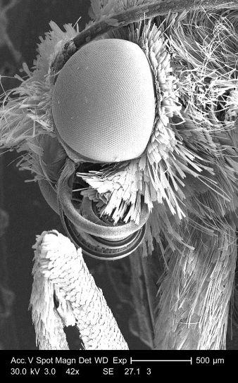 Details, Kopf, Bein, Gelenk, nicht identifiziert, Insekt