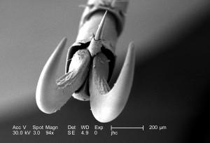 insecte, jambe, segments, six, crochet