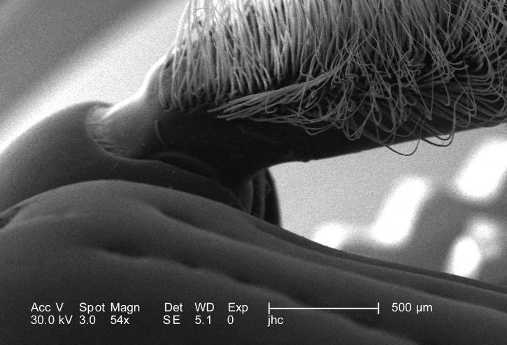 insectes, deux, maxillaires, palpes