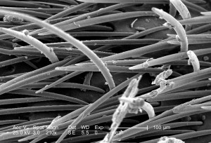 magnification, 210x, presence, sensorial, hairs, surface, exoskeleton