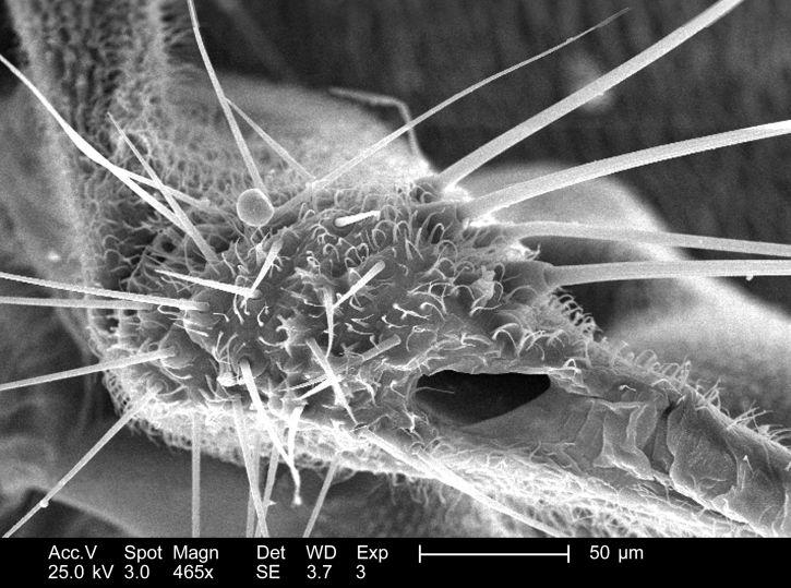 dettagli morfologici, associata, ala, l'attaccamento, non identificato, libellula