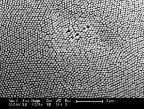 détails morphologiques, surface, non identifiée, les insectes, composé, oeil