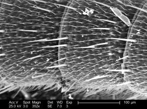 la segmentation, la longueur, une plus grande flexibilité, antennes