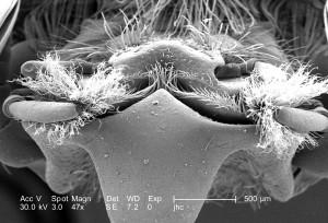 structures, associée, de la bouche, visible, labre, mandibules, maxillaires, labium