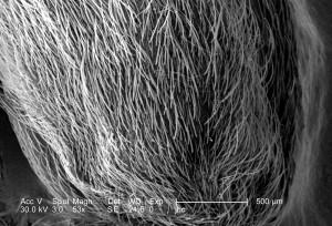 really, hairs, mammalian, sense, composed, keratin