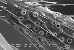 organism, maneuvered, jointed, legs, phylum, arthropod