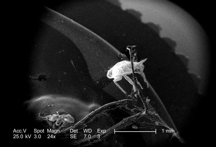 minuscules, insecte, photographie, libellule, distale, antenne, segments