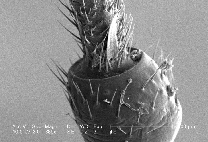 moderate, magnification, 369x, unidentified, debris, laden, insect
