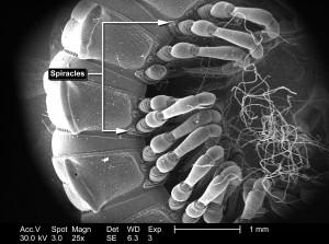 non identifié, millipèdes, segmenté, corps, mur, point articulé, jambes, insectes, exosquelette