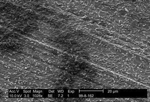 Legionella pneumophila, výzkum