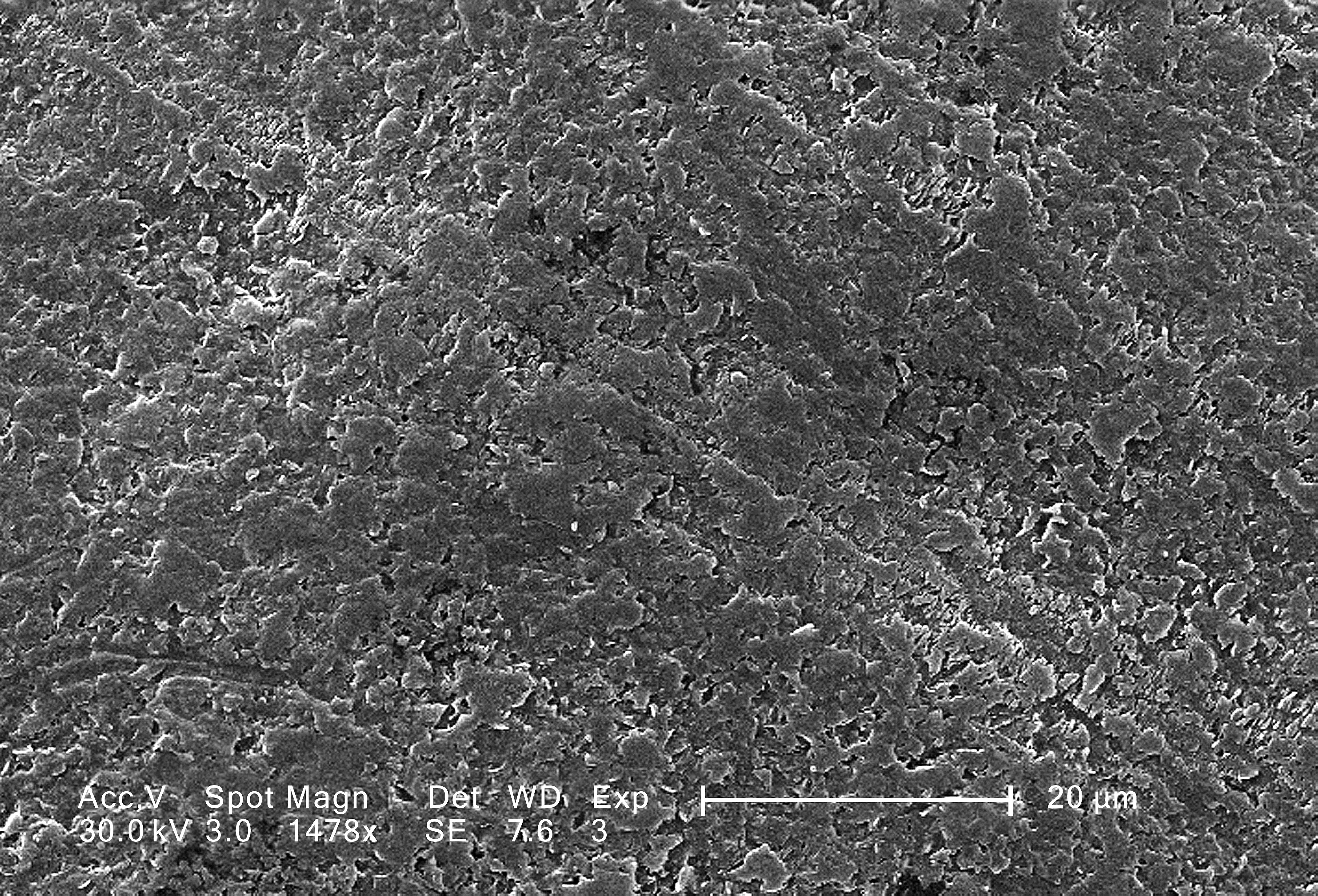 Free Picture Magnified Rough Surface Vitis White