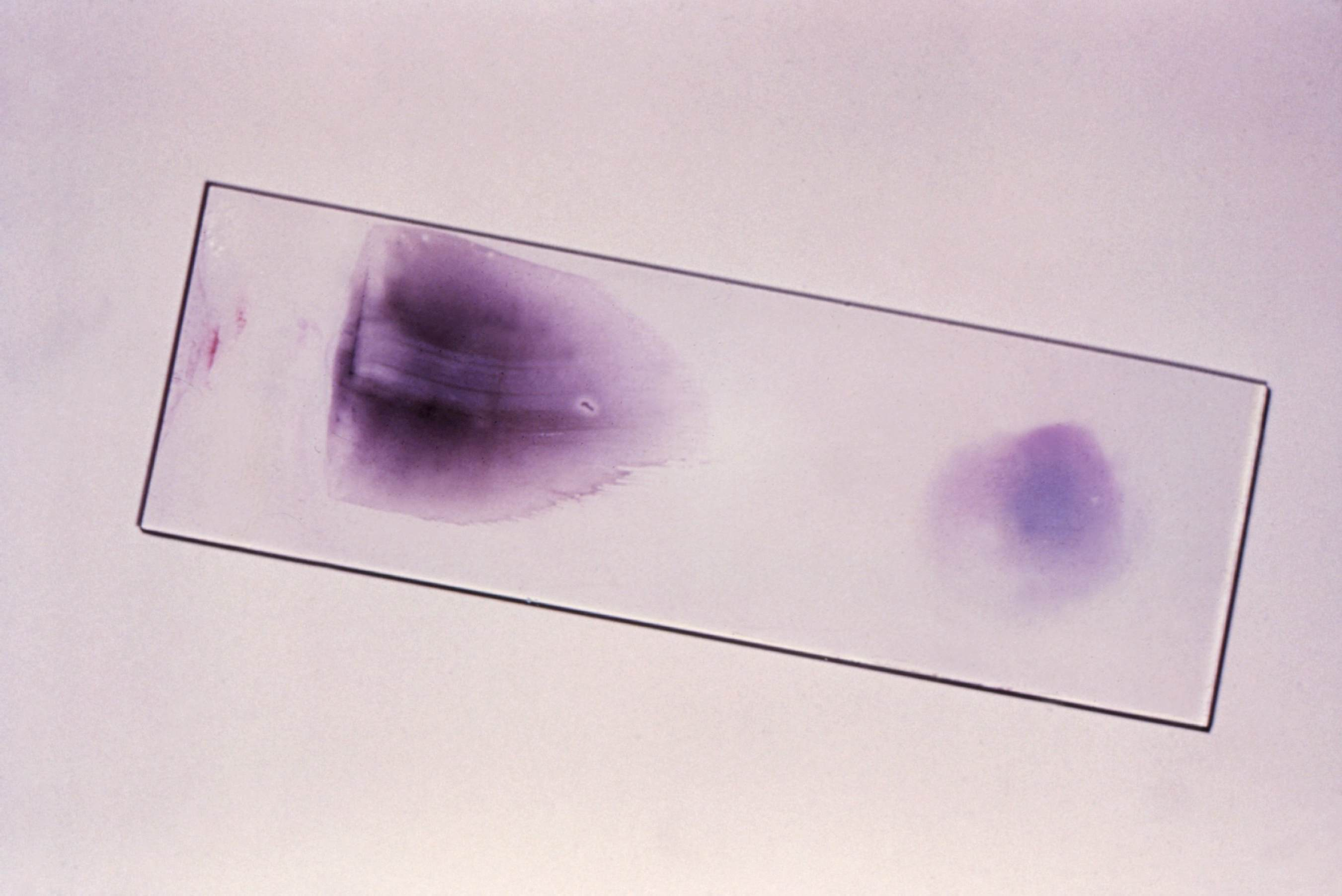 Free picture: microscope, slide, display, appearance ...