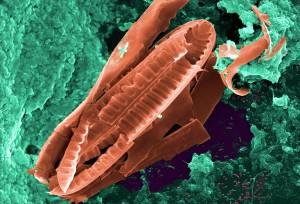 nombreux, protozoaire, amiboïde, bactéries, micro-organismes