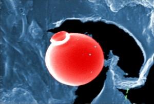 présence, non identifié, organismes, bactéries, protozoaires, algues