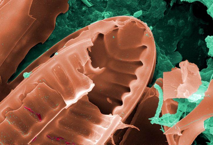 surrounding, diatomic, microorganism, large, biofilm, mass