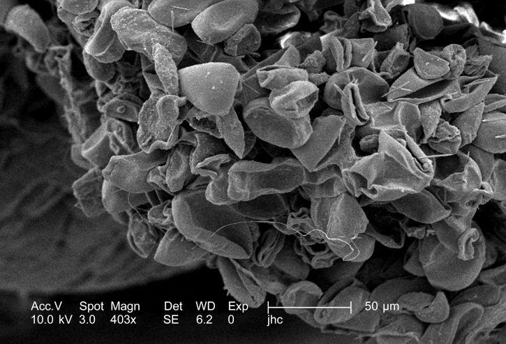 petal, unidentifiedspiderwort, flower, tradescantia