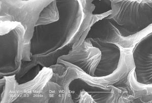 Ultrastrukturna, detalja, površinskih, grimizna