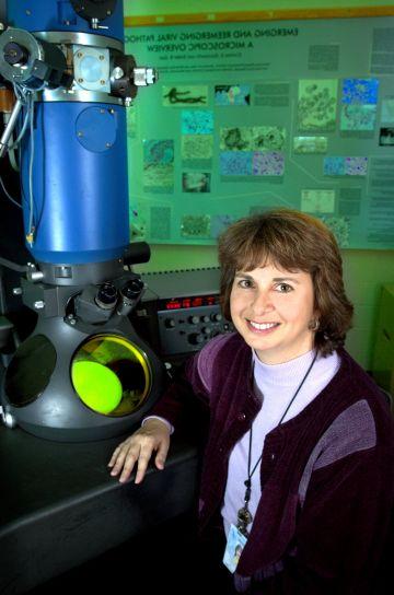 istraživanja, biolog, elektron, microscopist, sjedenje, otvorena, prijenos, elektron, mikroskopom