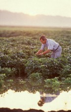 researcher, soybean, field
