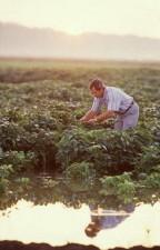 researcher, soybean, field
