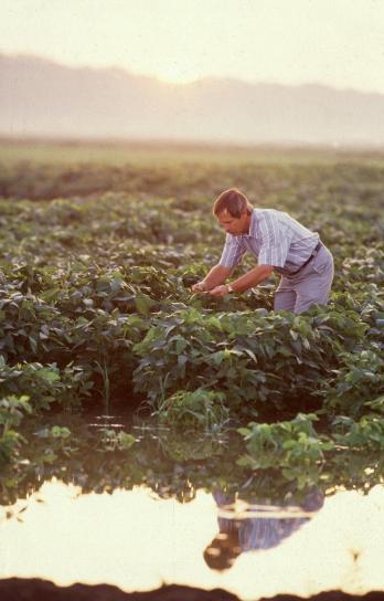 forskare, sojabönor, fält