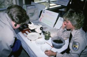 scientifiques, regarder, microscope, laboratoire