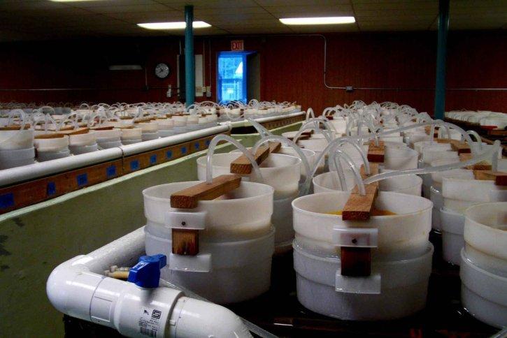 stoccaggio, contenitori, di laboratorio