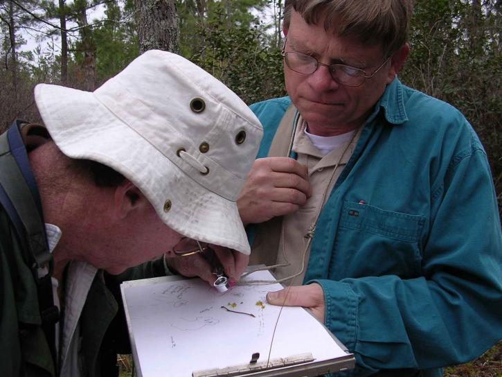 deux, les botanistes, les hommes, observer, Lindera, melissifolia, fleurs, pondberry