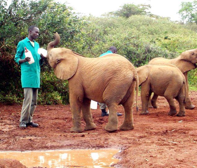 bambino, elefanti, santuario, orfani