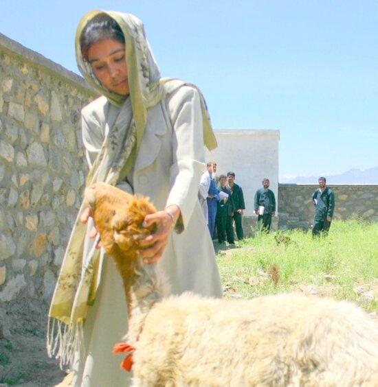 Primeiro, mulher, matricular, Pará, veterinário, treinamento, programa, executando, Afeganistão
